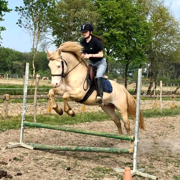 Cours perfectionnement cheval adulte